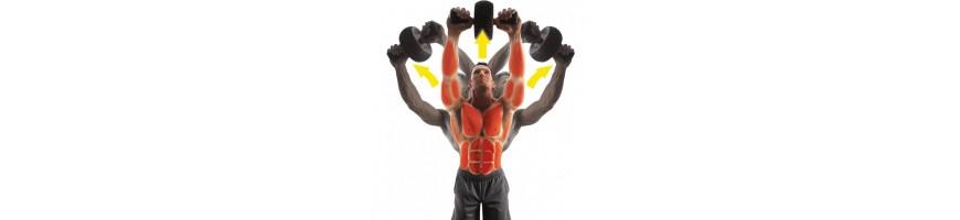 Bauch- & Rückentrainer